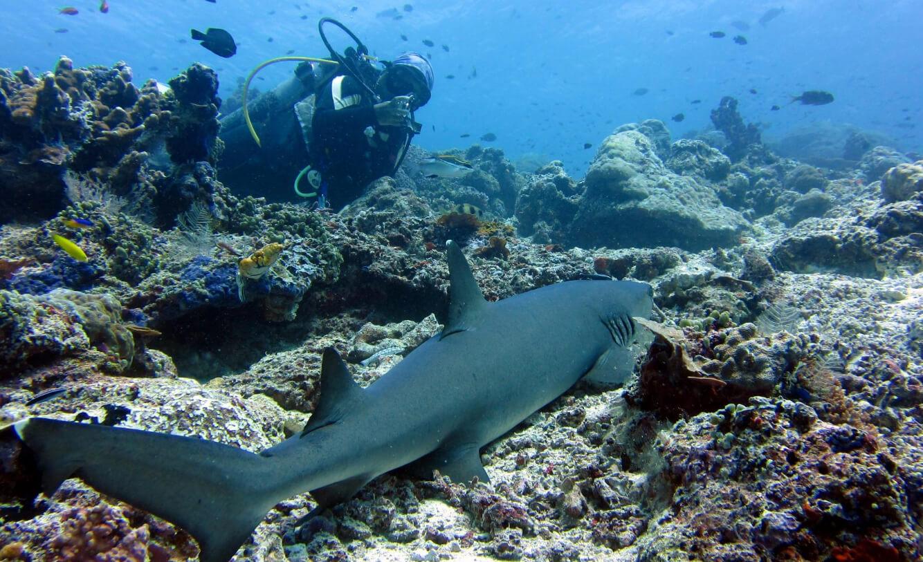 Акула в Национальном парке Сипадан