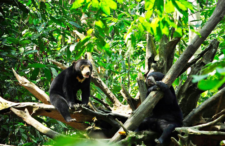 В центре охраны солнечных медведей на Борнео