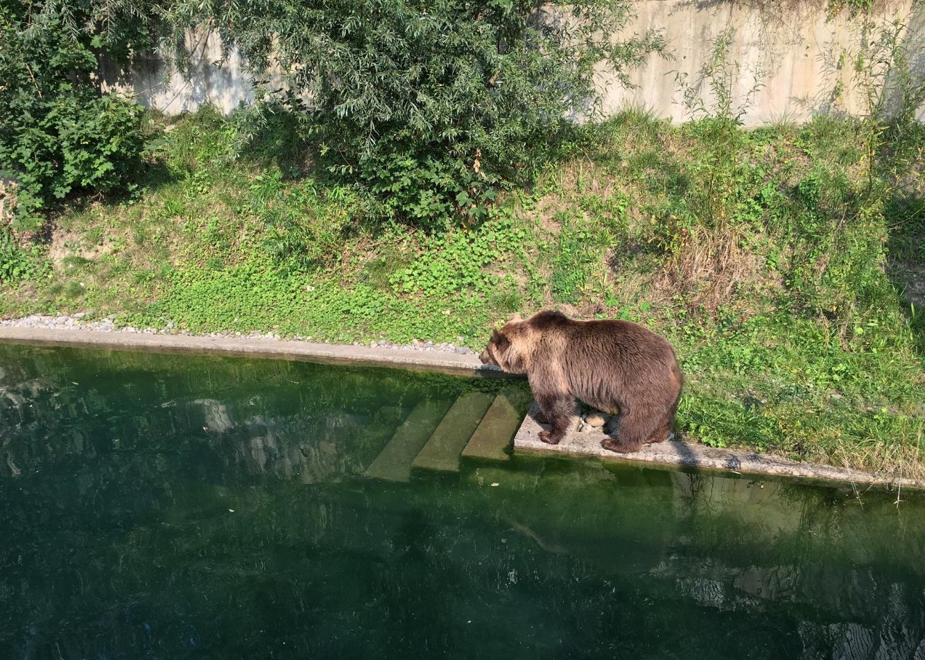 Медведь в Медвежьей яме