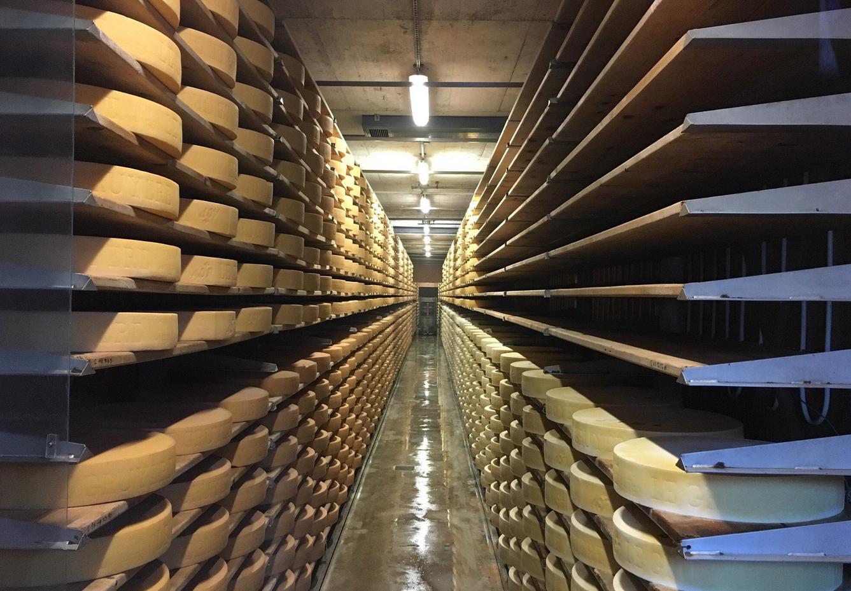 Этап созревания сыра Грюйер
