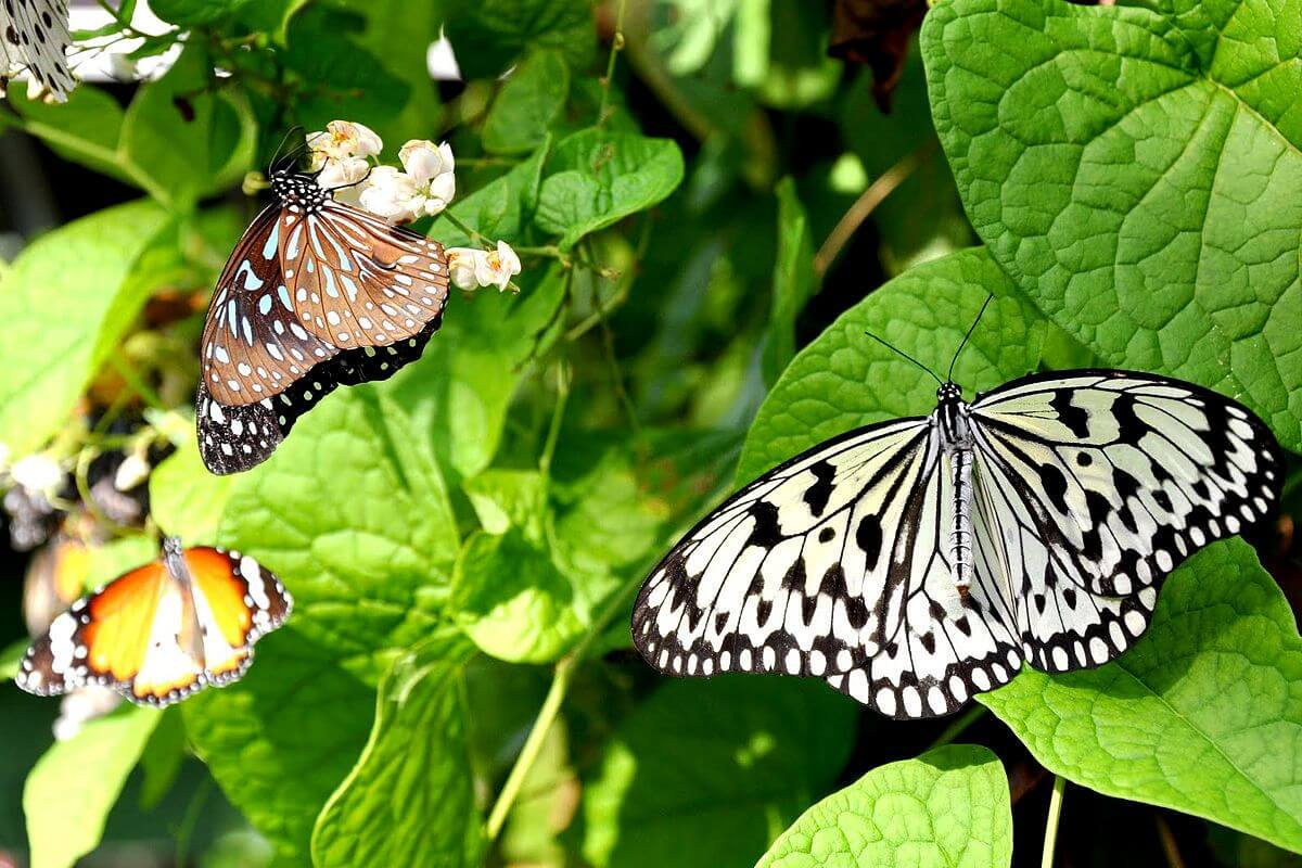 На ферме бабочек Entopia