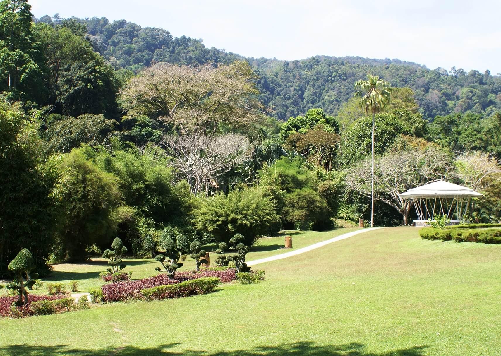 Ботанический сад (Penang Botanical Gardens)