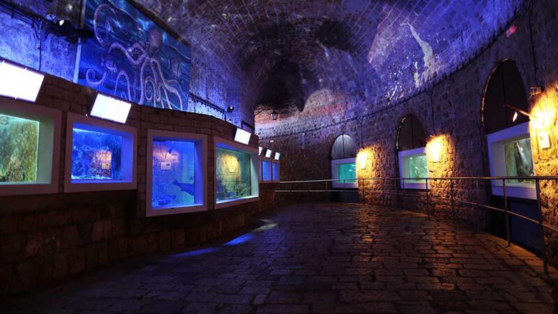 В крепости Святого Ивана находятся Аквариум