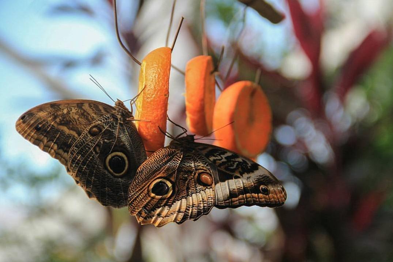 Бабочки в Konya Tropical Butterfly Garden