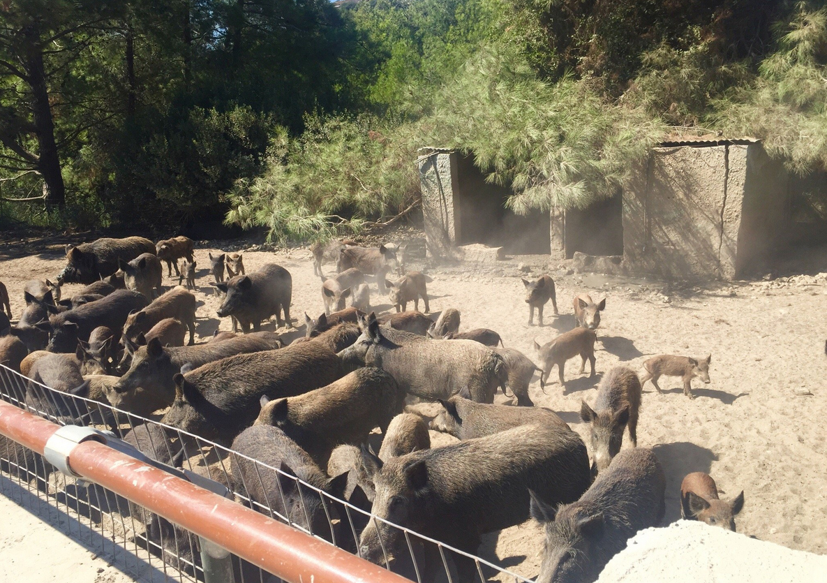 Зоопарк на территории фермы
