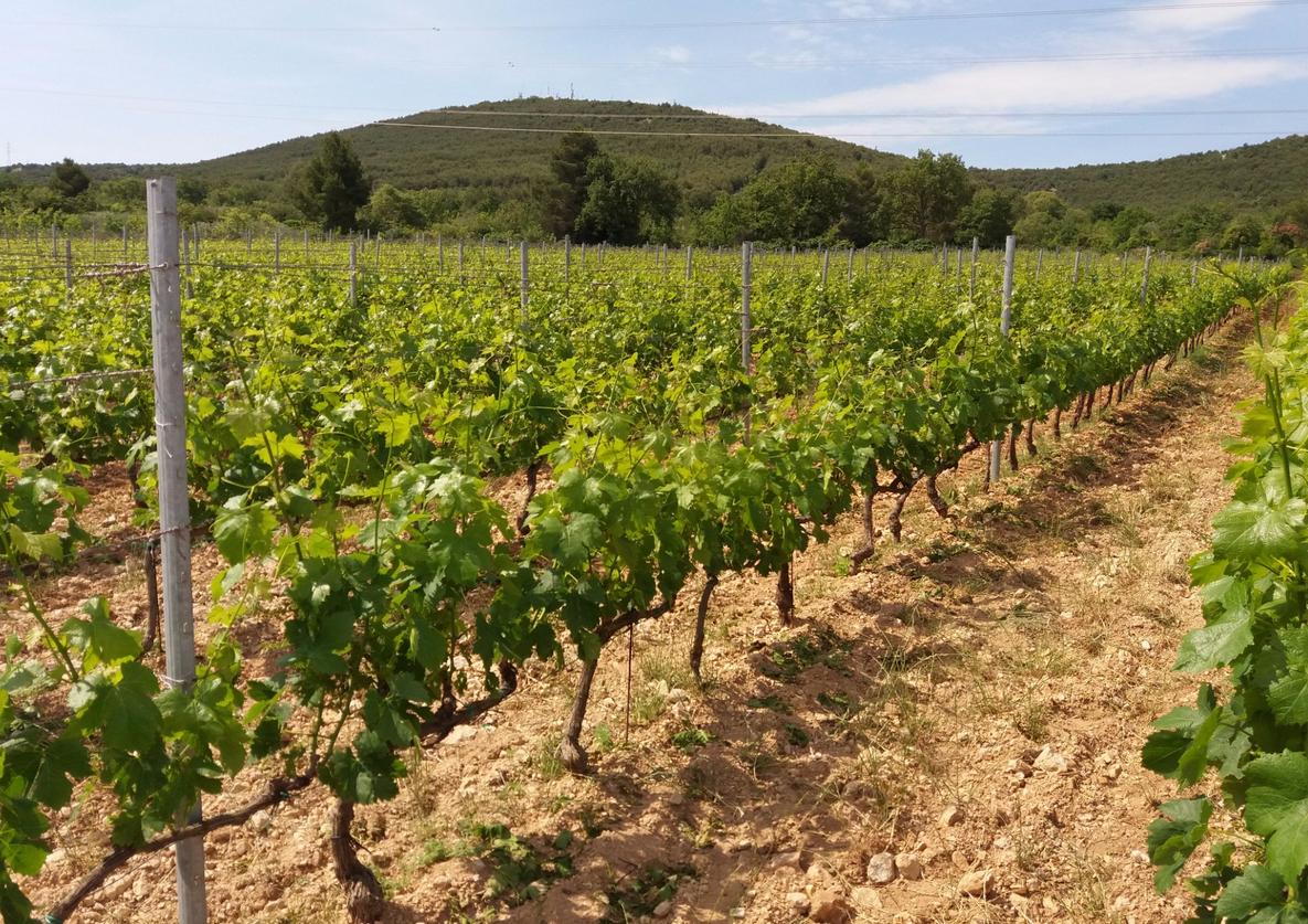 Посещение виноградника Vina Rak
