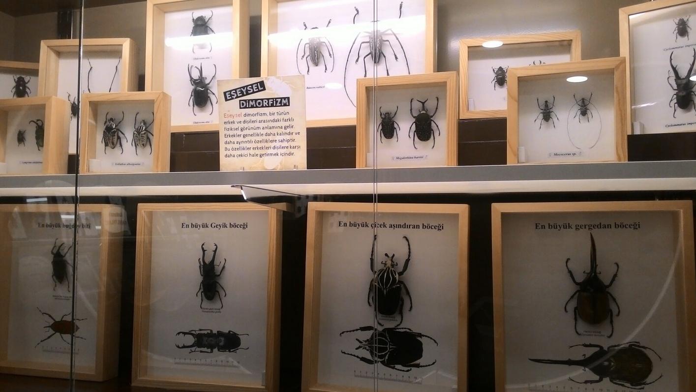 Экспонаты жуков