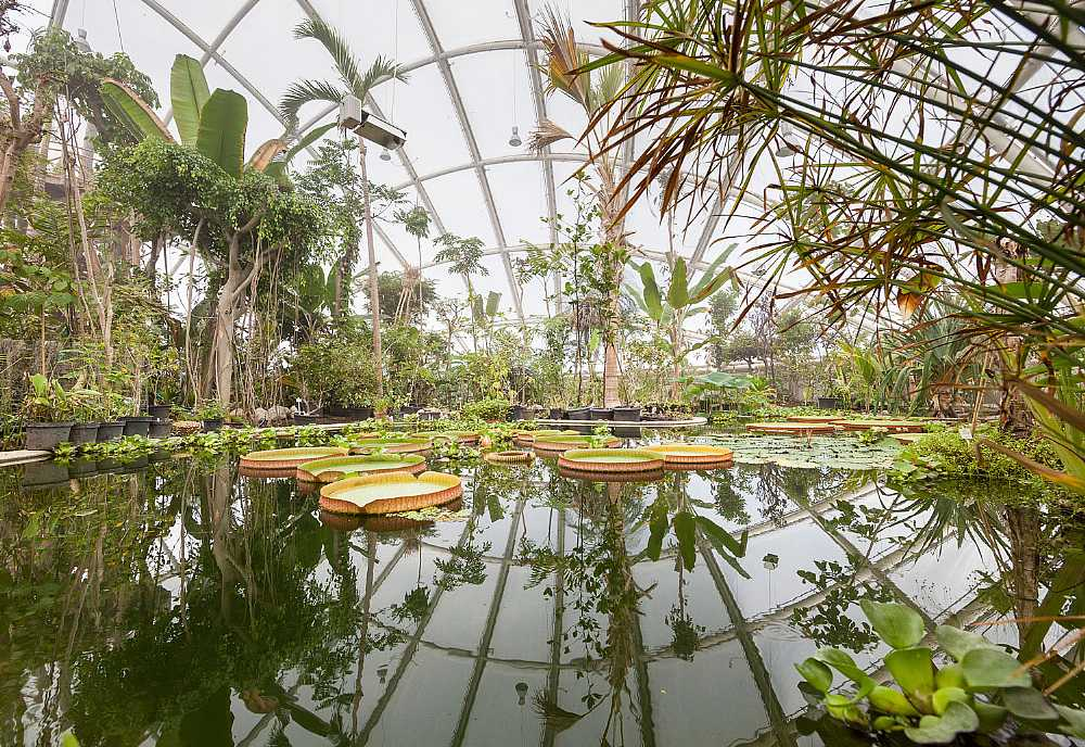 В ботаническом саду Орхуса