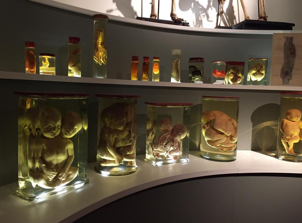 В музее Гронингенского университета