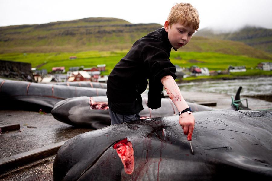 Убийство дельфинов разрешено законом Фарерских островов