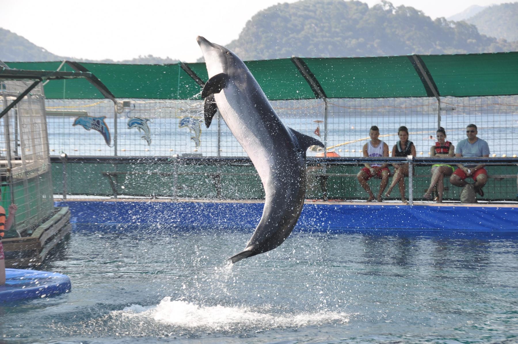 Представление в дельфинарии Мармариса