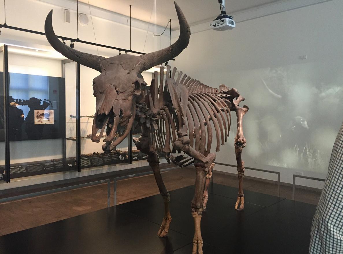 Скелет в национальном музее Дании