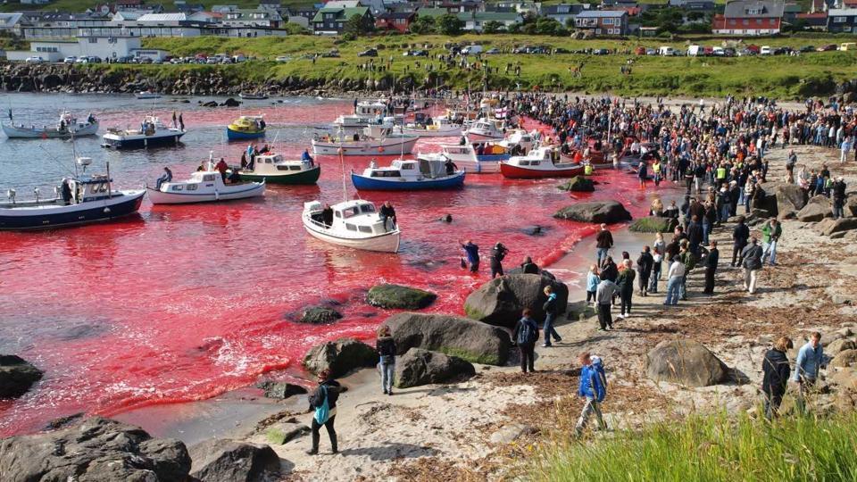 Собрание людей посмотреть на убийства млекопитающих