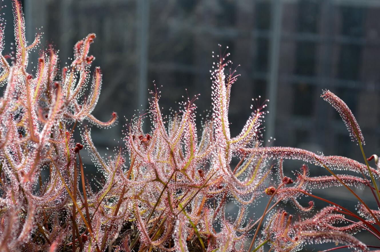 Интересное растение в ботаническом саду Лейдена