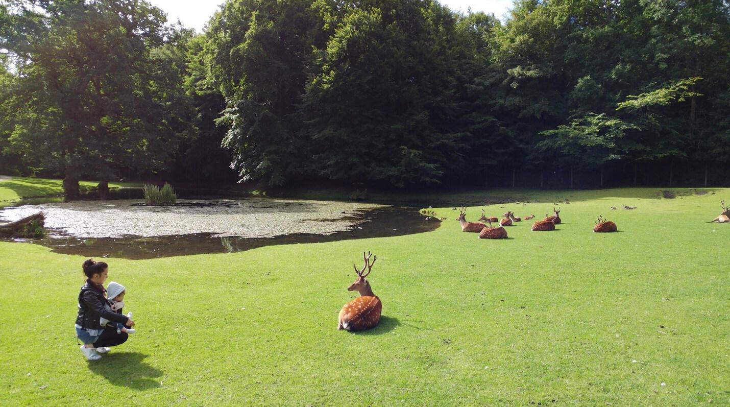 Олений парк Marselisborg Deer Park