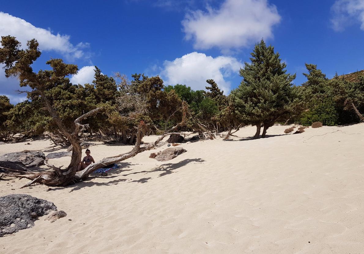 Единственную тень на пляже создают можжевельники