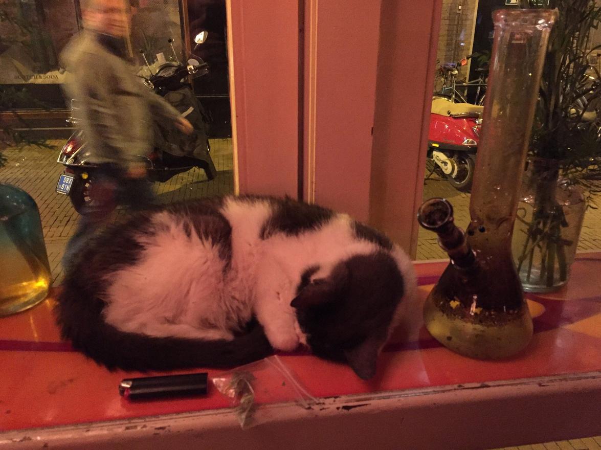 Кот растаман в De Dampkring