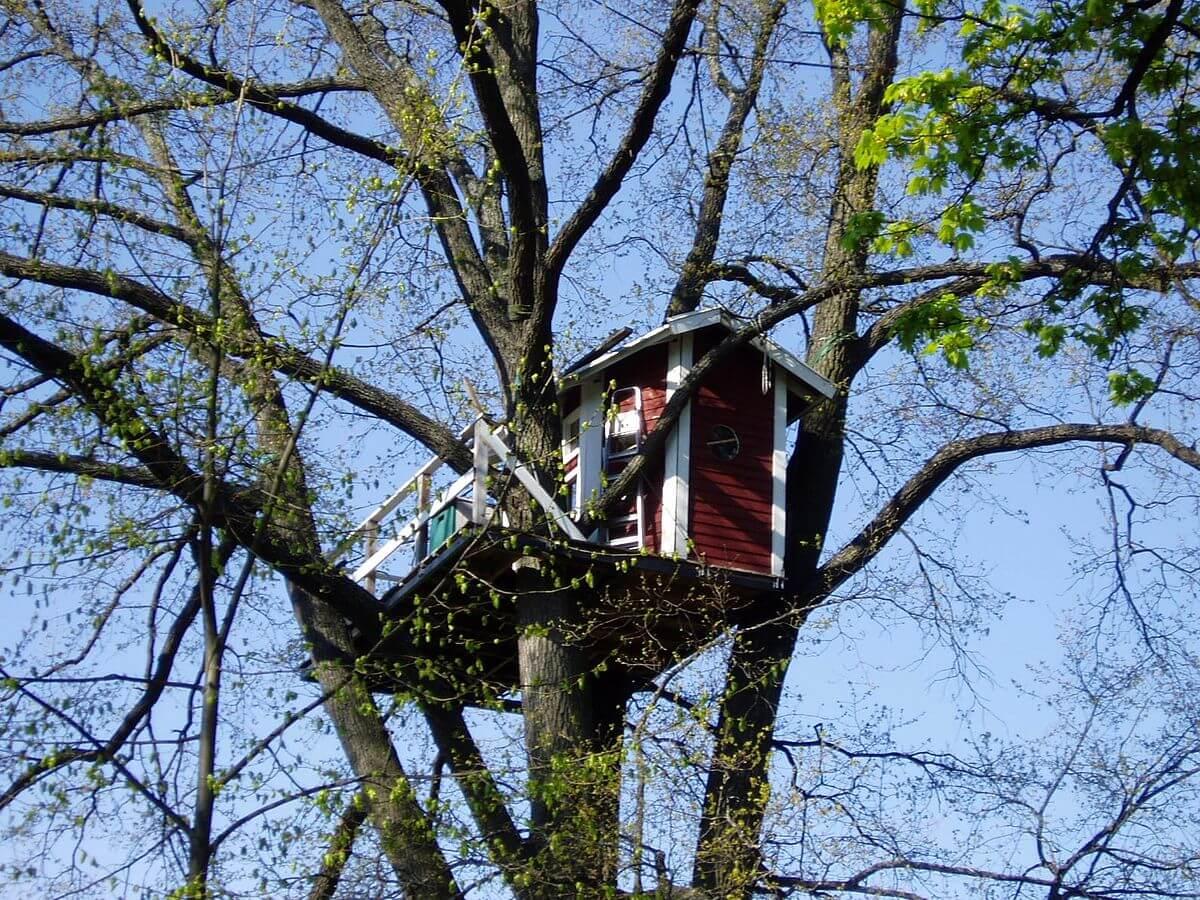 Отель Hotell Hackspett на дереве