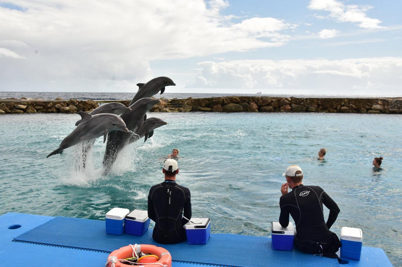 Академия дельфинов