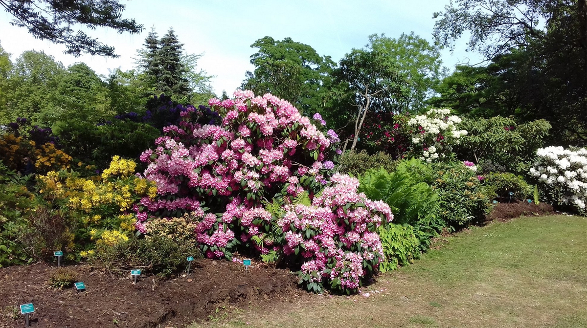Ботанический сад, Лунд