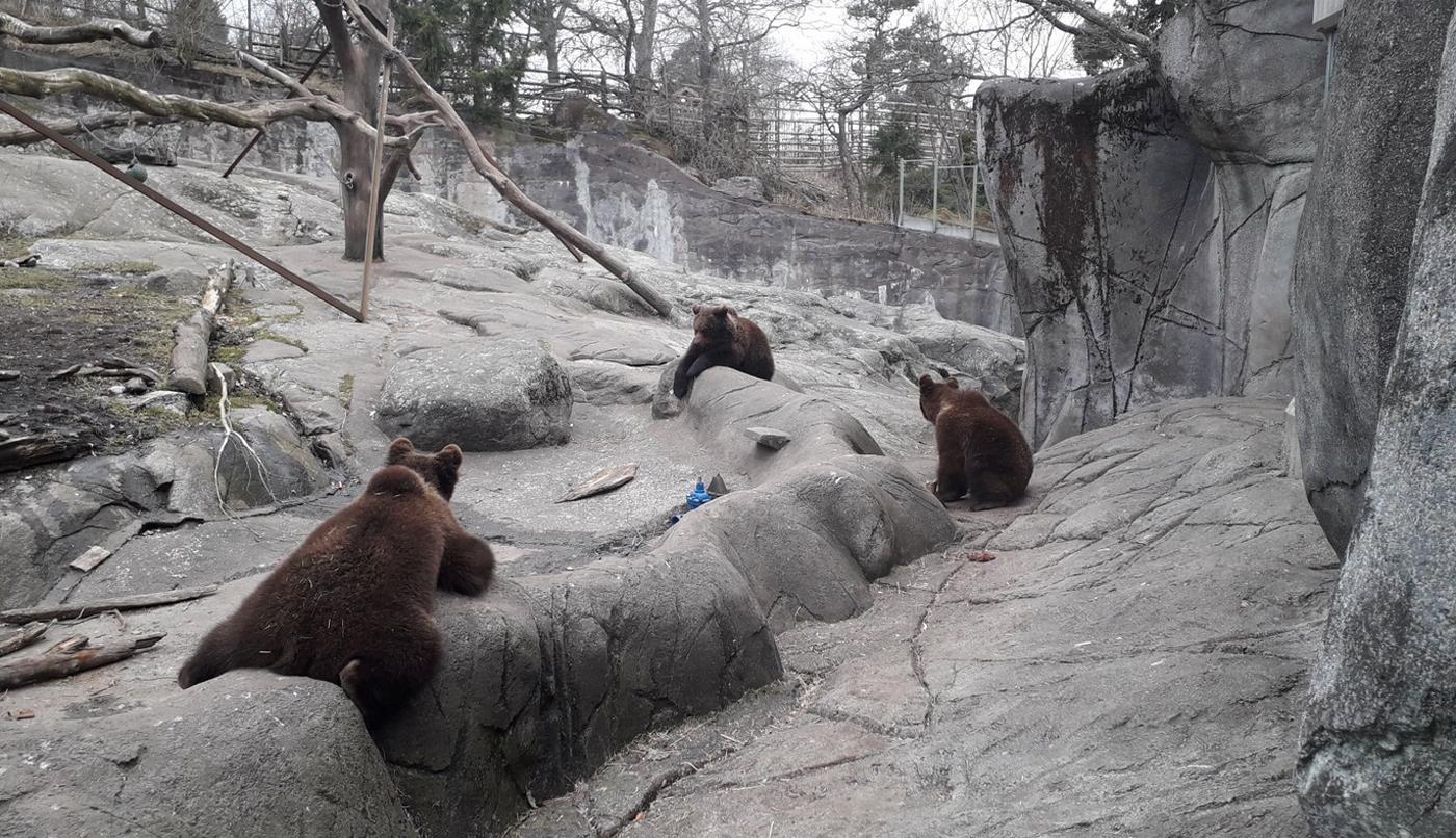 Зоопарк Скансен