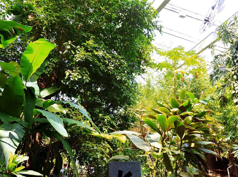 Для птиц обустроена тропическая зона