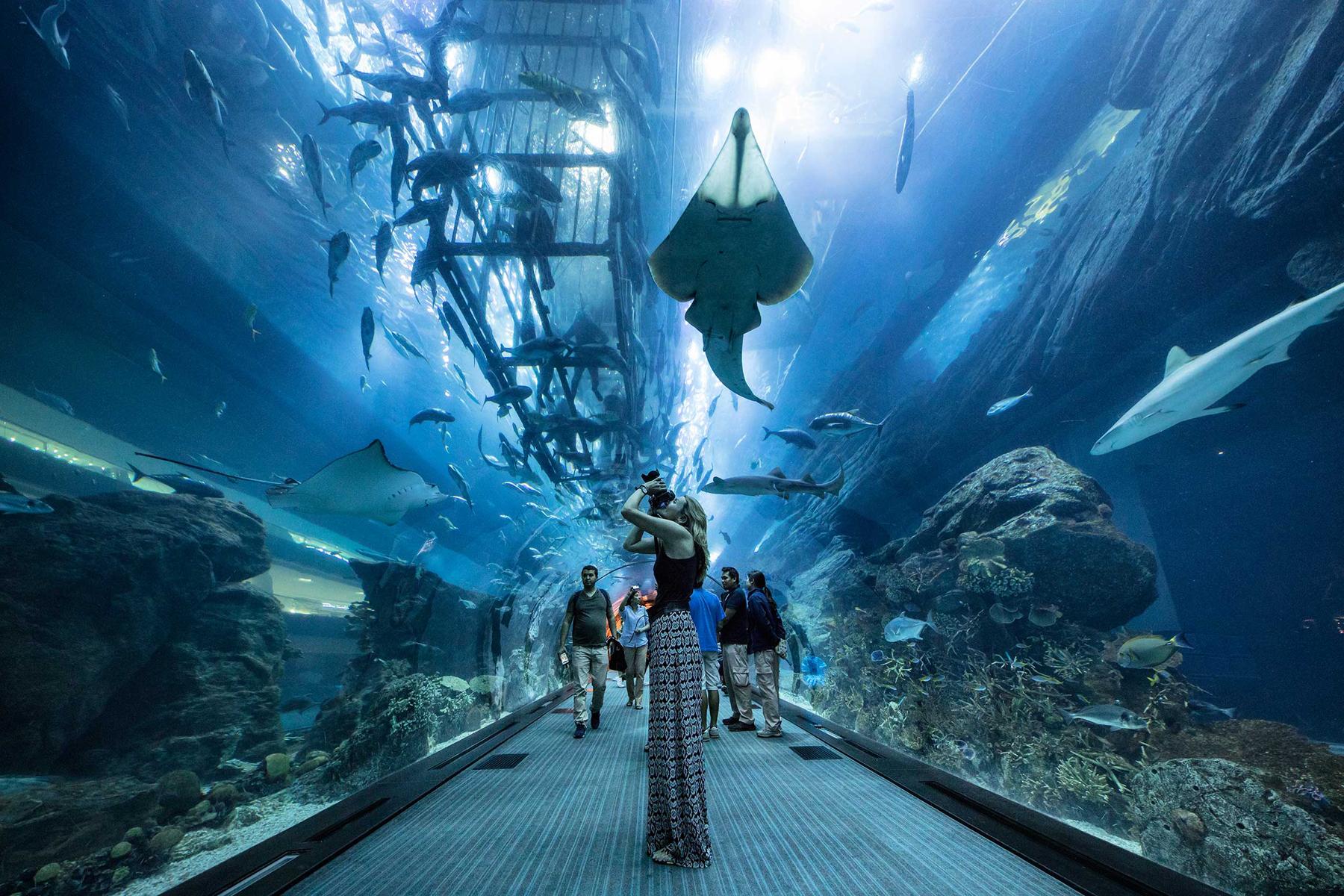 Океанариум в Дубае