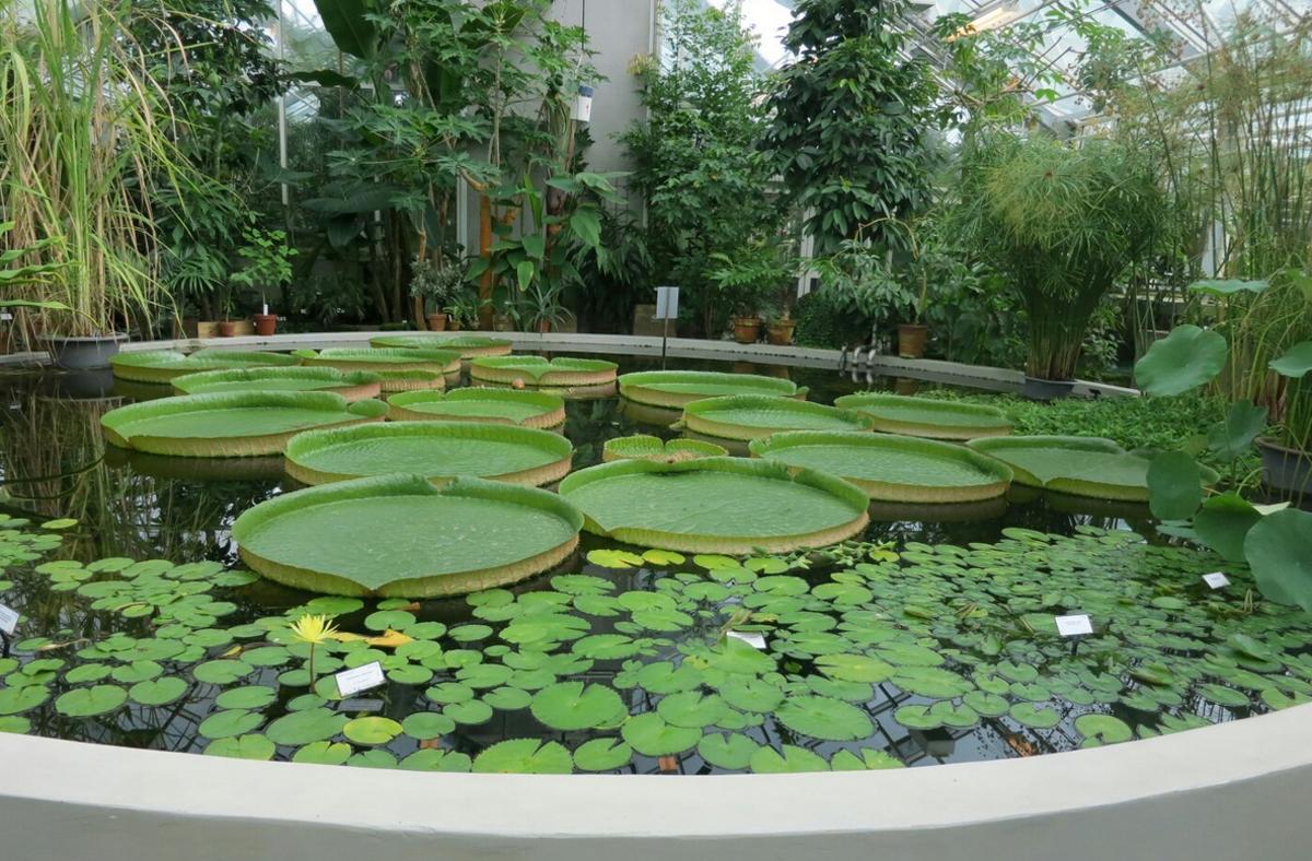 Оранжерея с тропическими растениями