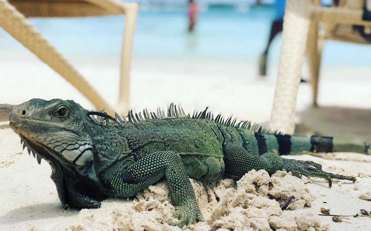 Пляж Игуаны