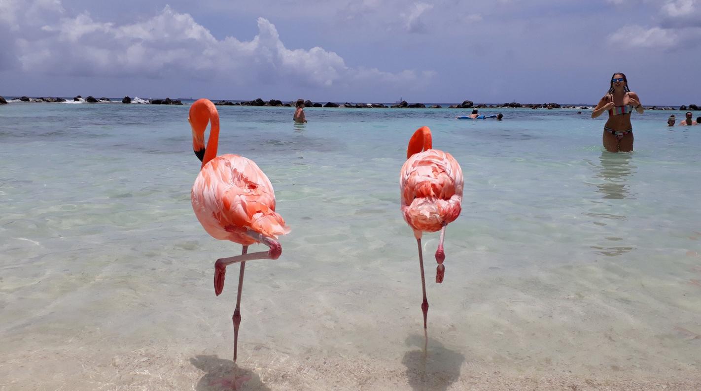 Розовые фламинго на пляже