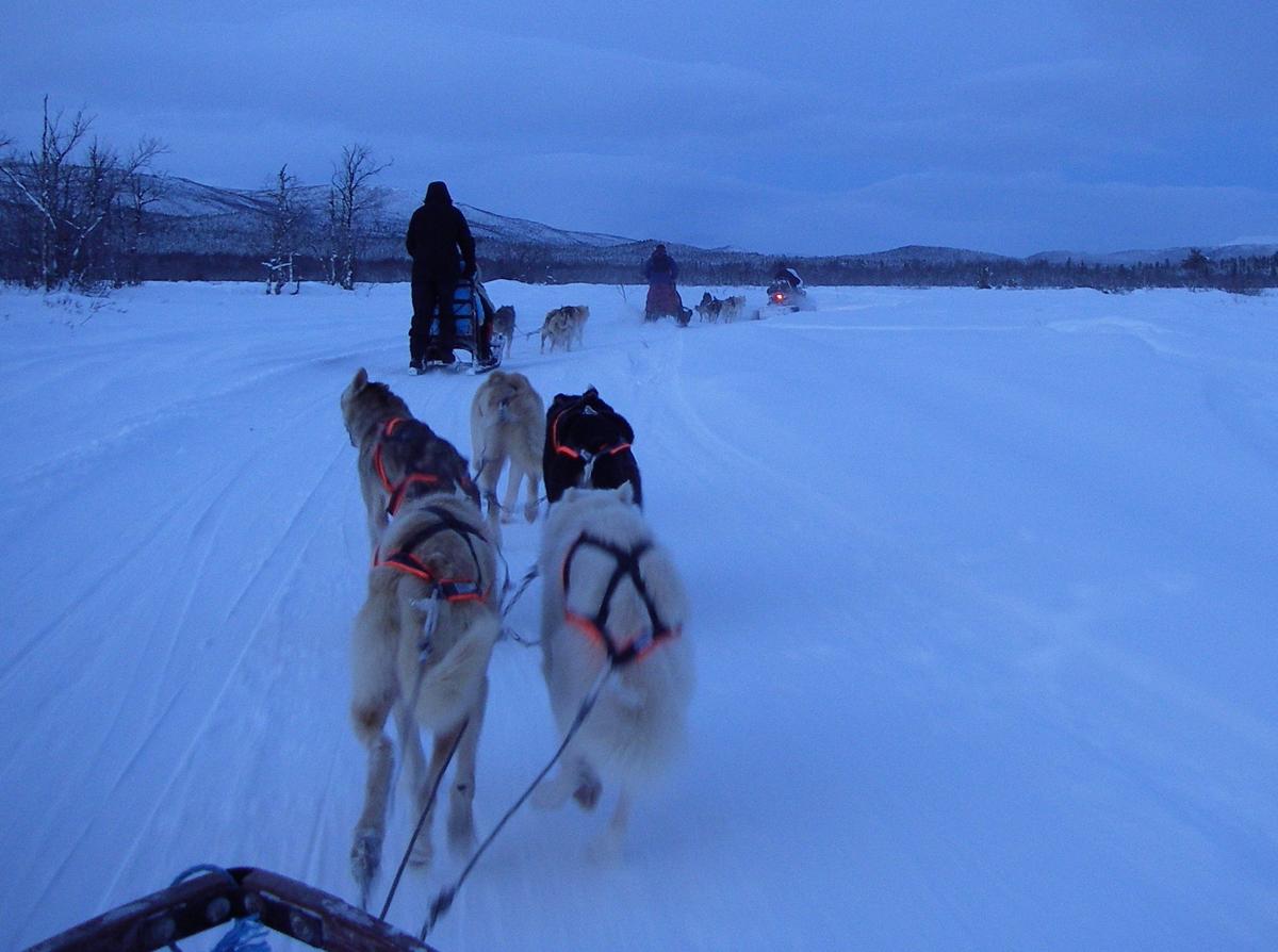 Езда в упряжках с собаками