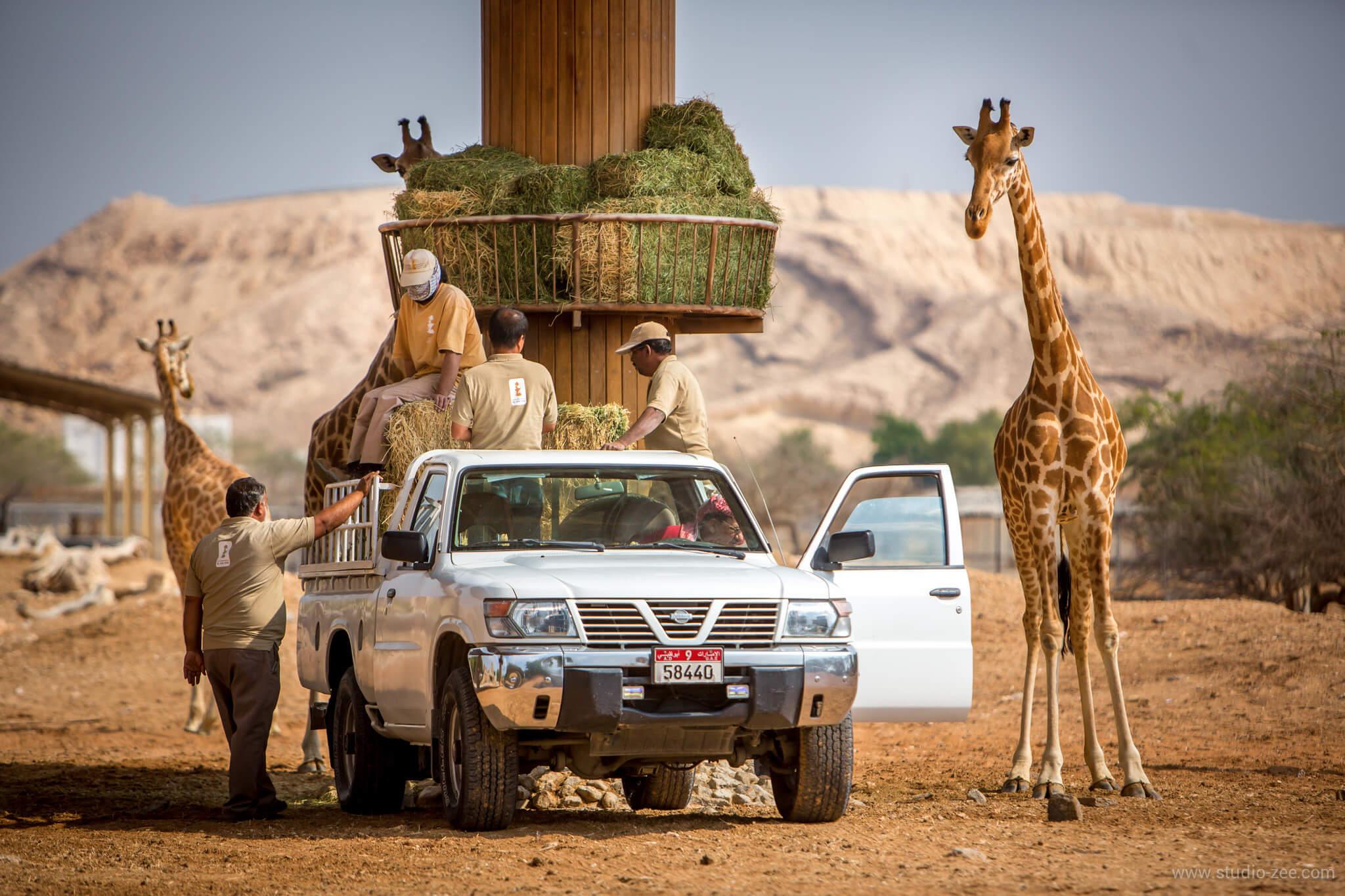 Зоопарк в Аль-Айн
