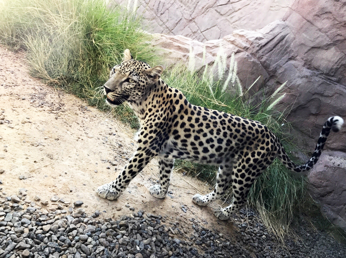 В Арабском центре дикой природы