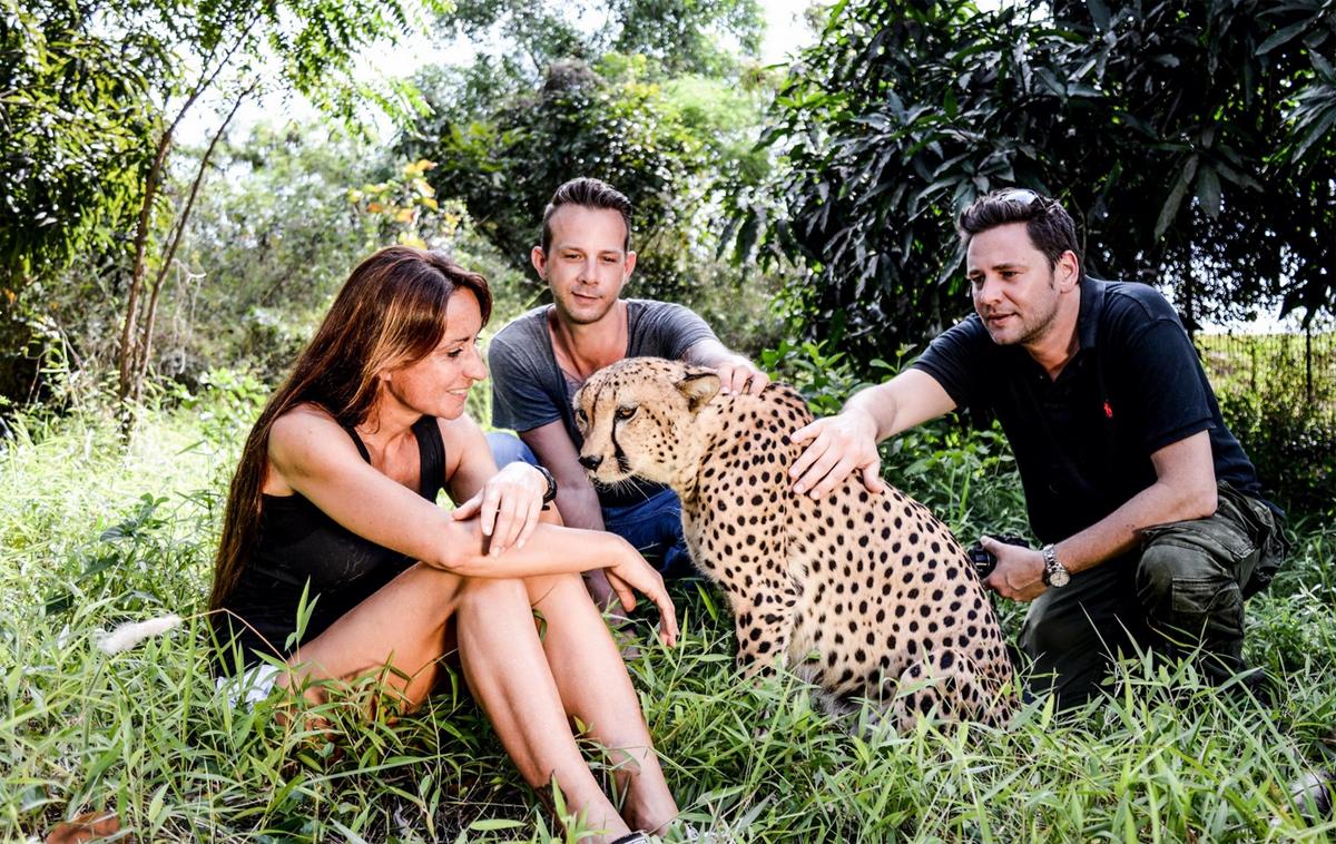 Можно пообщаться с гепардами