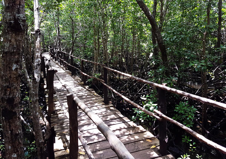 Деревянные мостики в национальном парке Джозани Чвака