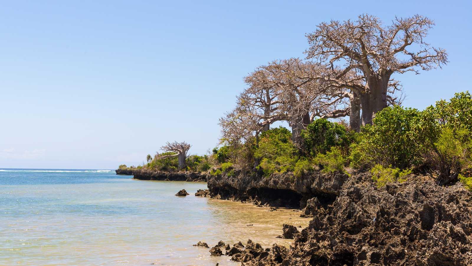 Пемба – остров Танзании с богатым рифом