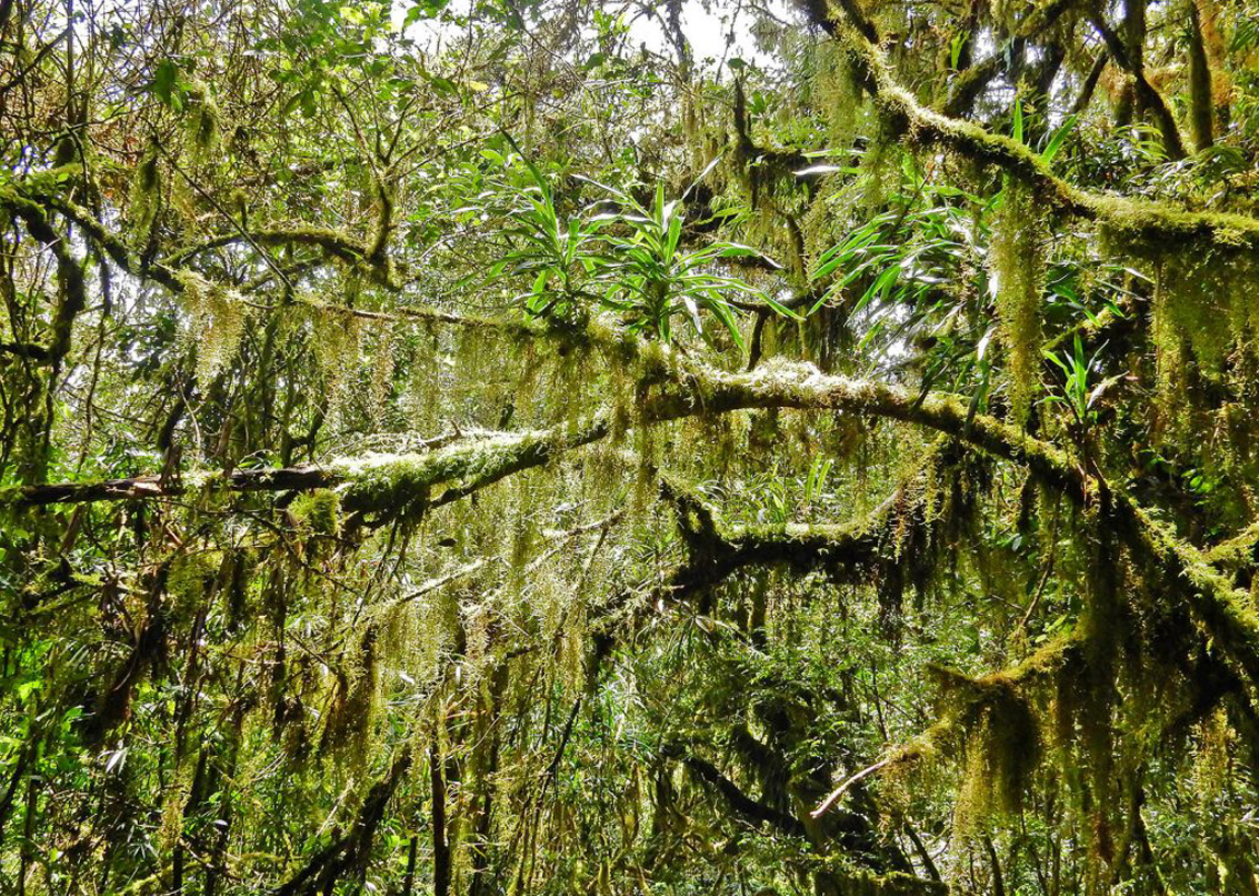 Тропический лес Килиманджаро
