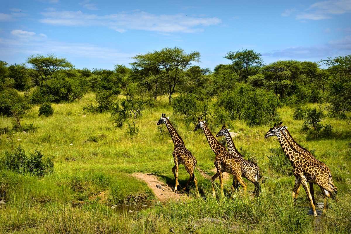 Природа Занзибара