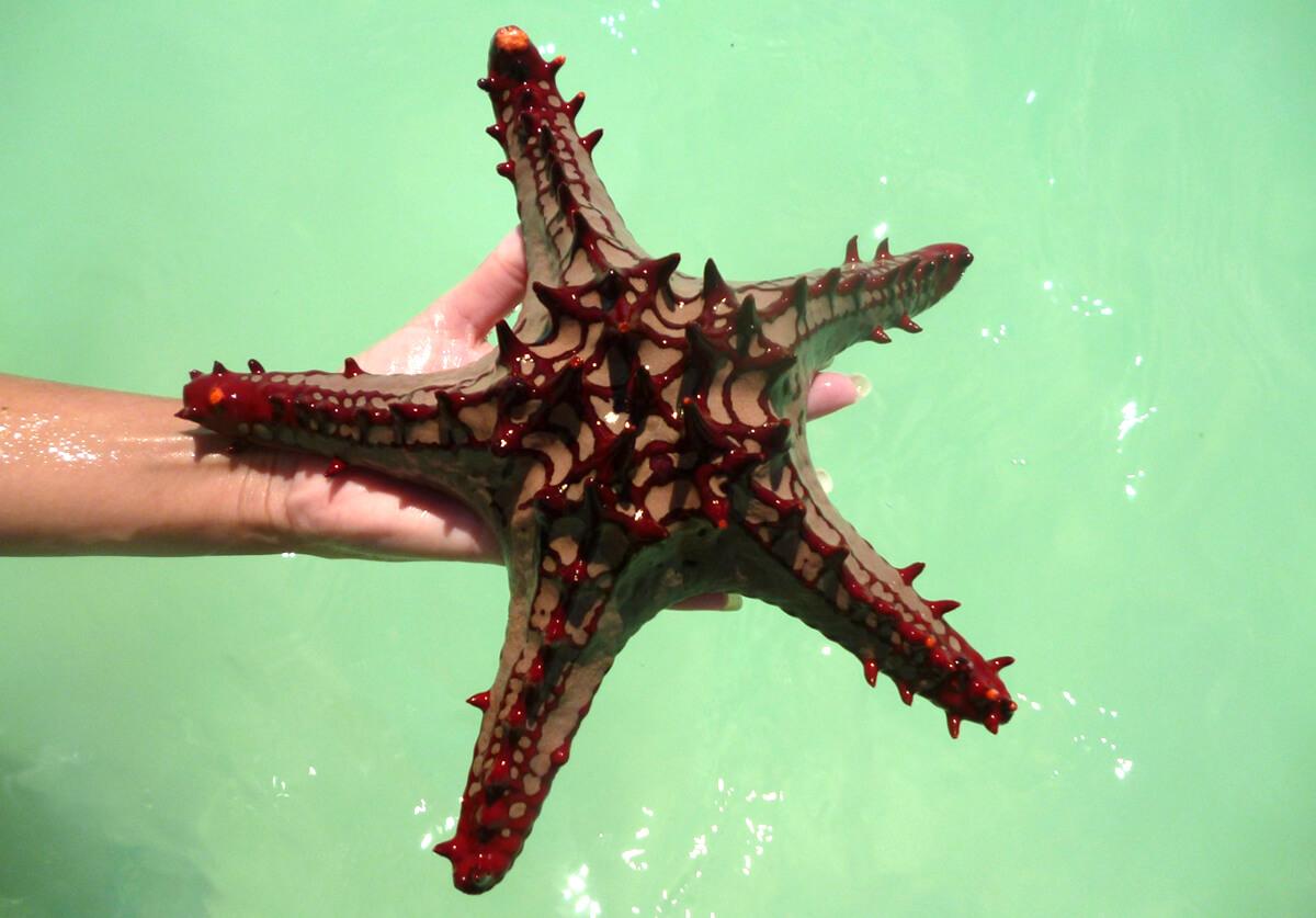 Обитатели океана