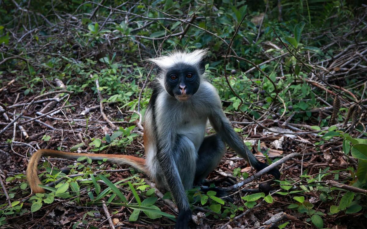Национального парка Jozani Chwaka