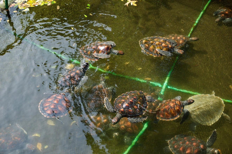 Mnarani Marine Turtles - заповедник черепах
