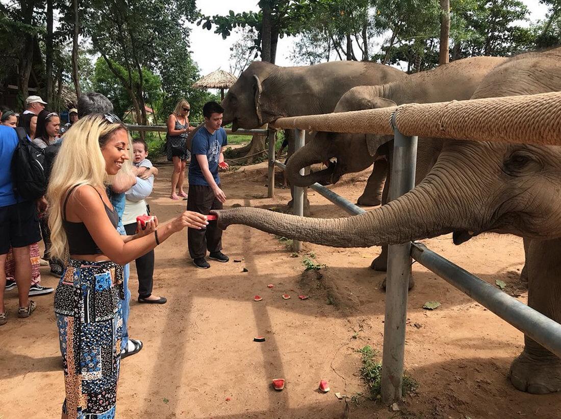 Можно покормить и погладить слонов