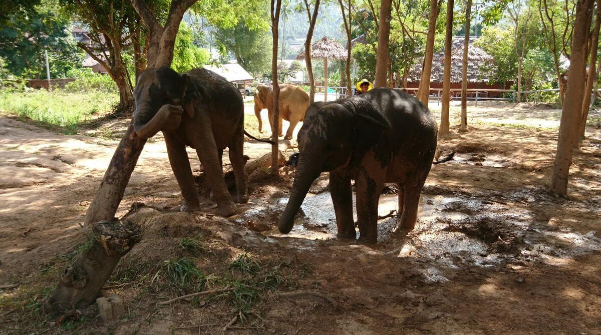 Слоновий приют