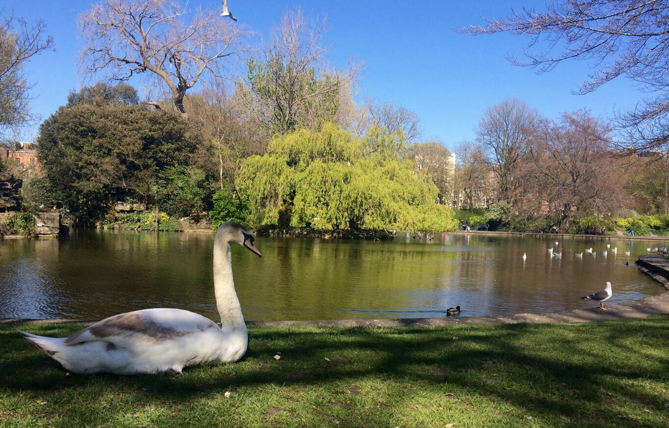 Декоративное озеро, где живут птицы