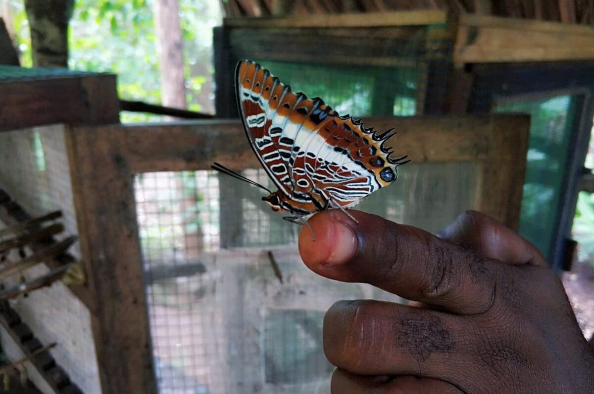 Бабочка в саду бабочек