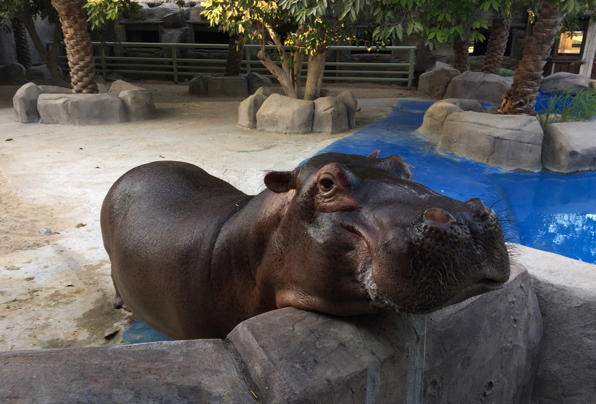 Зоопарк Эмирейтс