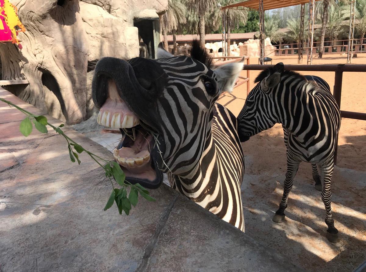 Можно приобрести корм и угостить жителей зоопарка