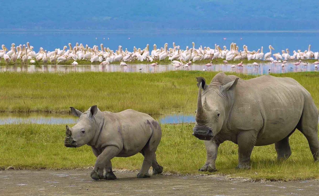 Носороги в заповеднике Нгоронгоро