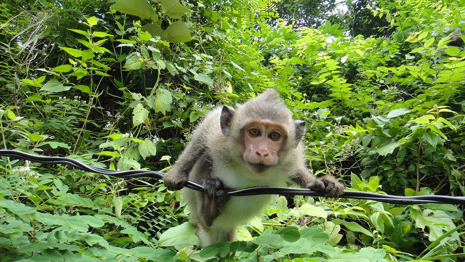 В лесах обитают обезьянки