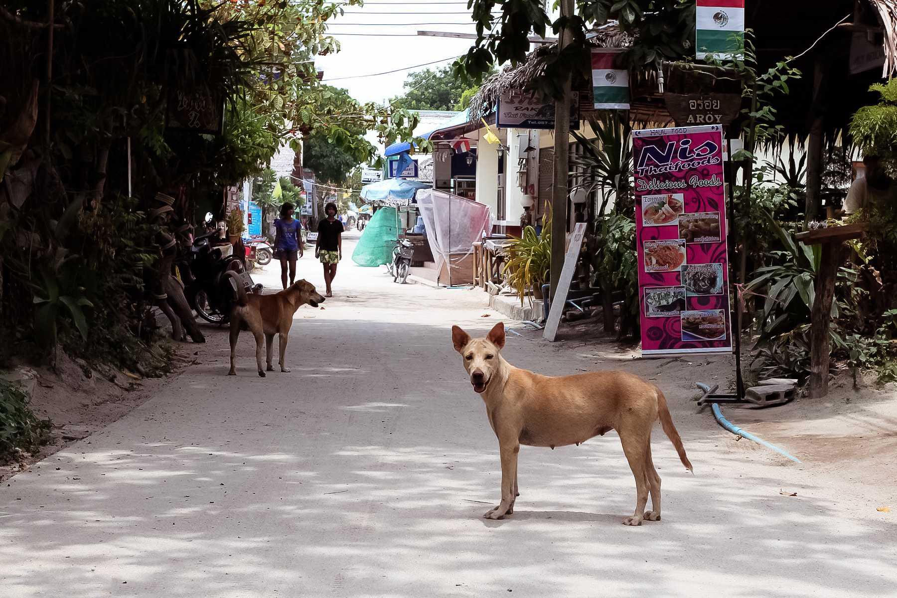 Собаки на острове Ко Липе